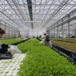植物工場と省エネ ~②ヒートパイプとヒートポンプ(㈱良葉東部)~