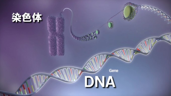 ed_From-DNA-to-protein-3D