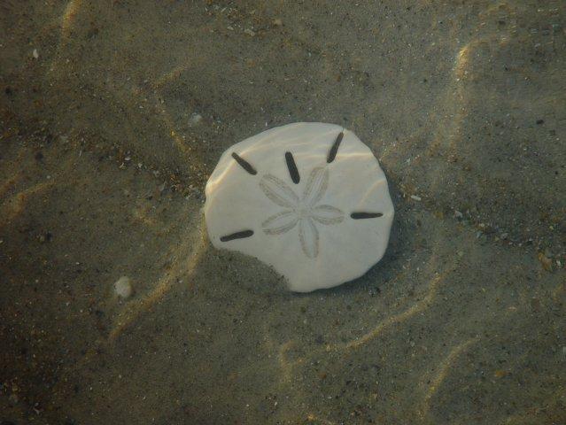 Sand Dollar Island Aka The Knob Beaufort NC