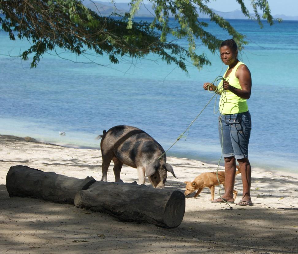 Punta Rucia Pig