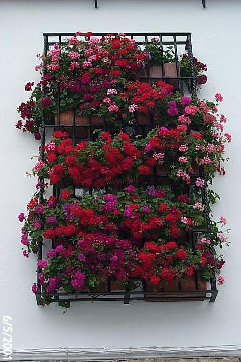 Rejas con flores de Córdoba