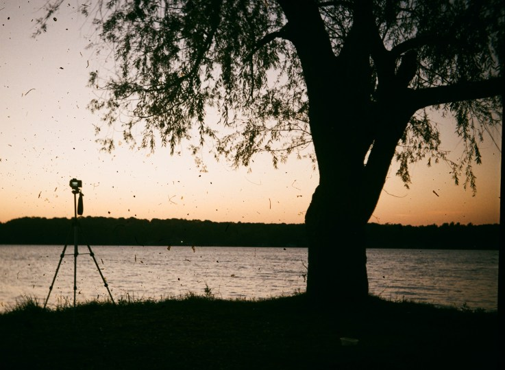 Although I like the silhouette of this shot, I have no idea why there is so much dirt on this exposure.