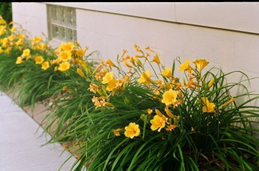 Knowing the camera might have some focal plane issues, I took this shot at an angle and estimated focus halfway into the flowerbed.