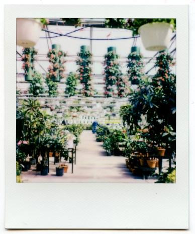 PolaroidSX70Color-5