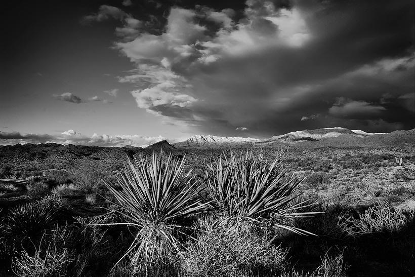 Desert Snow Storm Arizona Cactus Yucca