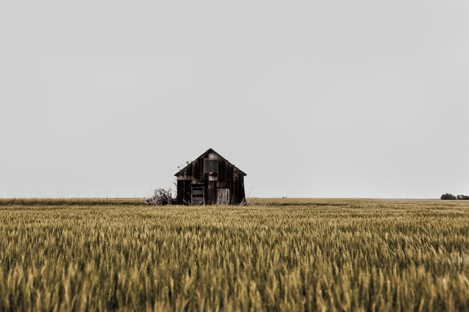 A sea of wheat -