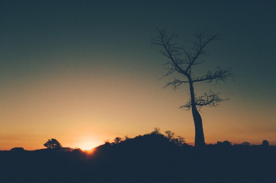 Africa-0184