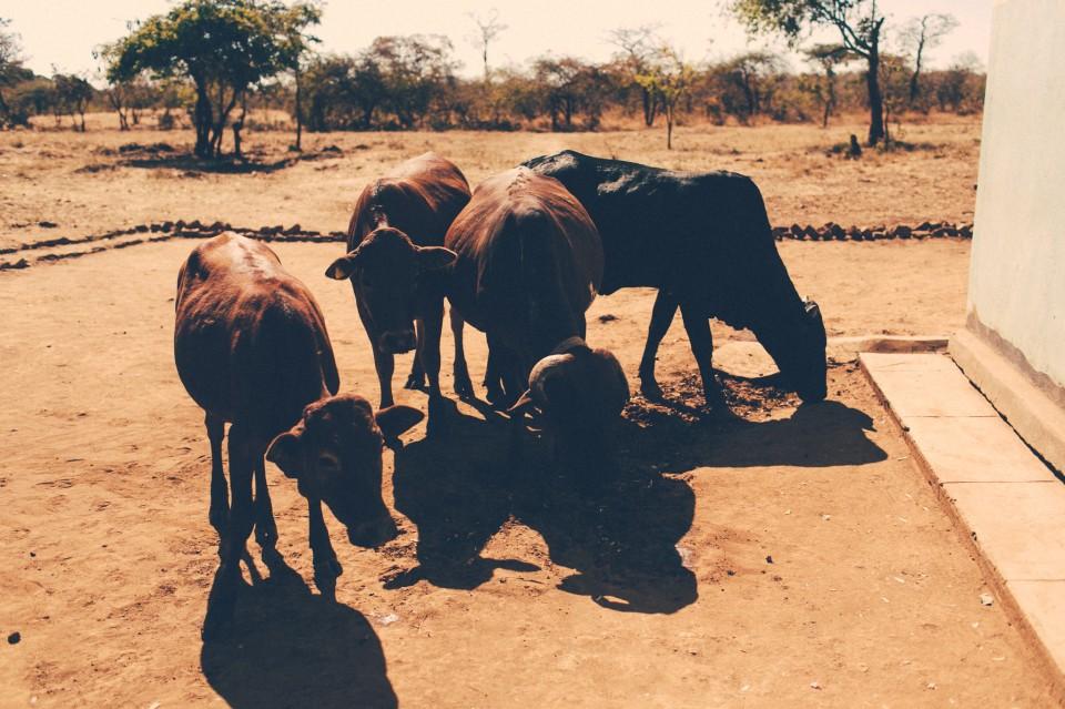 Africa-1468
