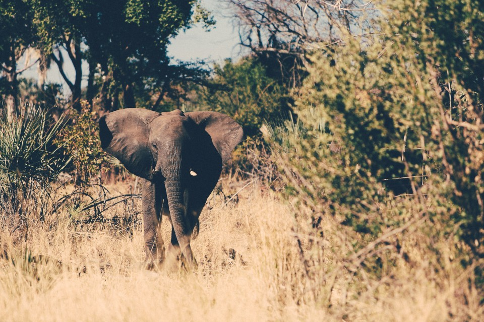 Africa-184