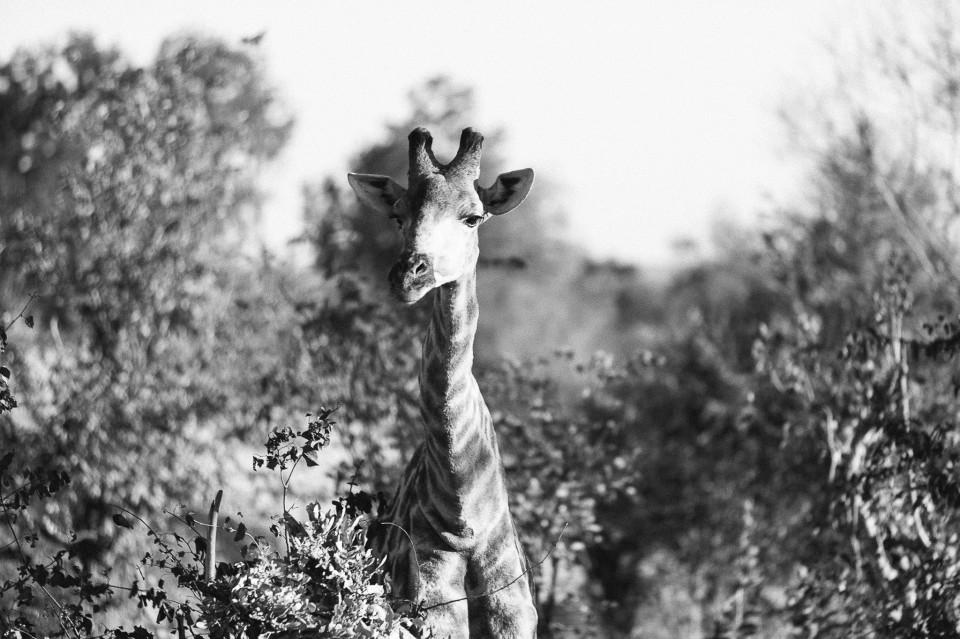 Africa-188