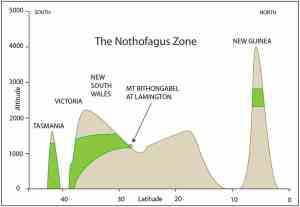 The Nothofagus Zone (green) between Tasmanian and New Guinea (pretty sure I adapted this figure from someone else's a long time back. I'll add the credit when I find it)