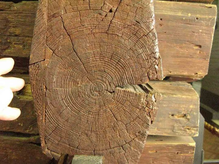 The end of one of the logs making up Peter the Great's log cabin in St Petersburg. The narrow growth rings indicate the short growing season in this region of very harsh winters.