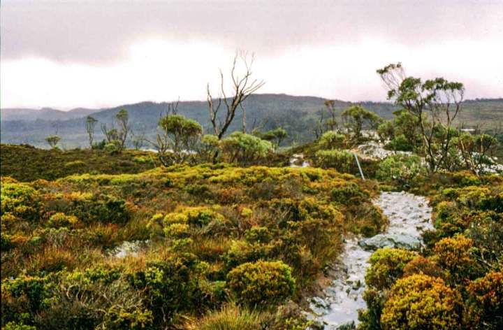 An un-boardwalked section of the Overland Track. The peat has been worn away to expose rocks.