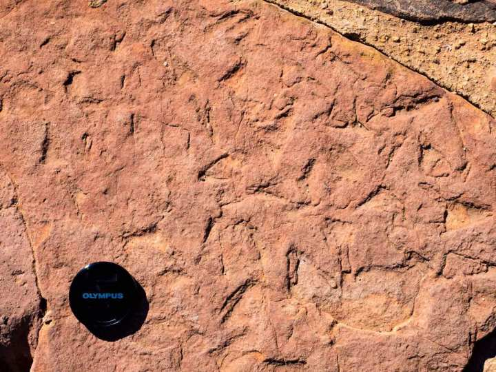 Possible remains of a mass kill of armoured fishes. Mereenie Sandstone, Kings Canyon National Park, central Australia.