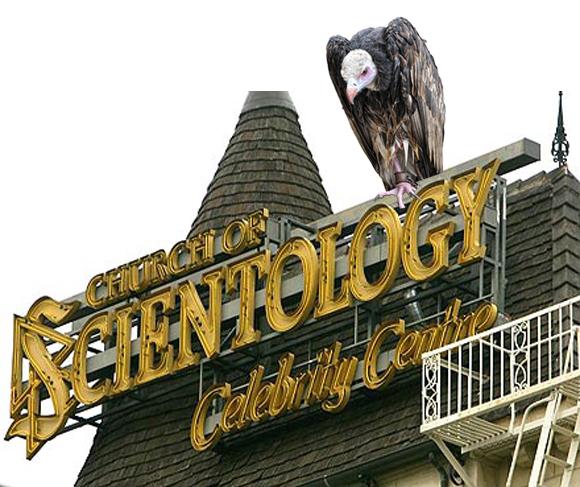 scientology-vulture-culture.jpg