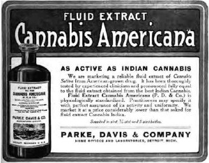 Label - Cannabis Extracts: RSO, CBD, FECO, CO2, Dabs – Confused?