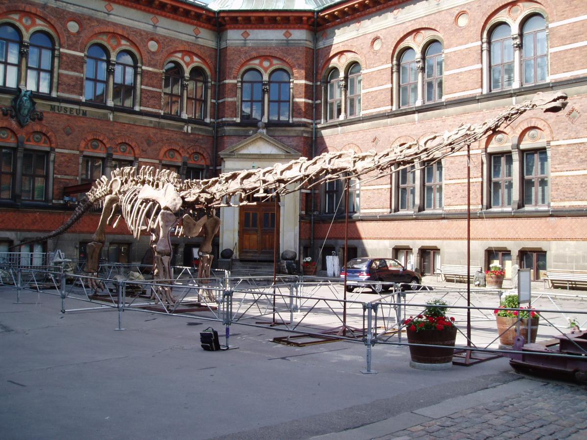 Obligatory sauropod vert shot: the Copehagen copy of Mamenchisaurus hochuanensis