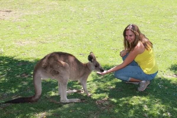 Canguru na Australia por mikix