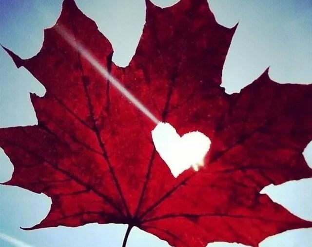 Coração canadense
