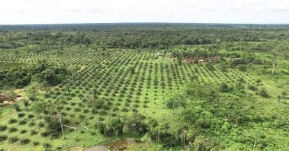 Spirende kaffeplantager