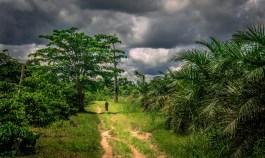 Smuk natur i Congo