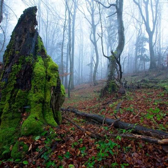 Warsztaty fotografii przyrody