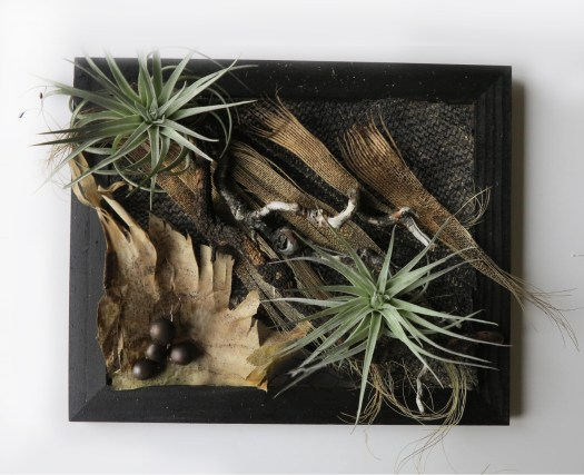 framed_succulent_collage