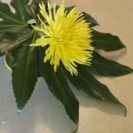 tropical-flower-arrangement