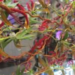 fleurs-de-villes-show