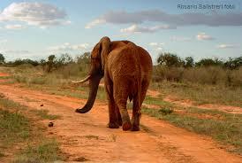 il cimitero degli elefanti