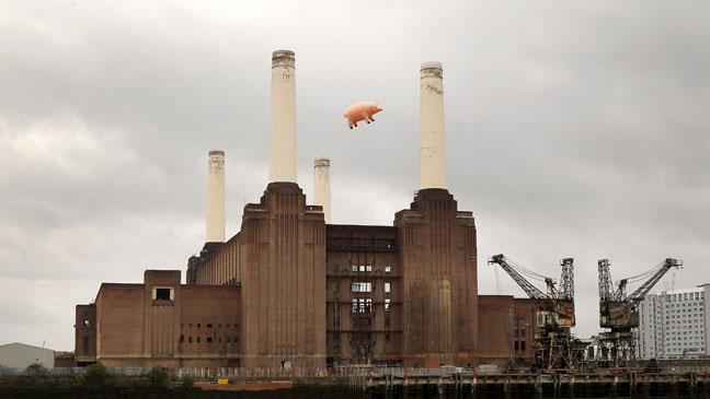 Flying Pig Recreates Pink Floyd Album Cover