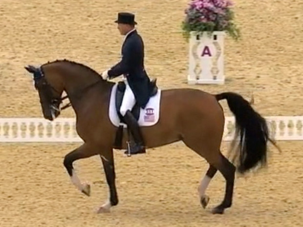 heres-a-great-gif-of-ann-romneys-horse-competing-in-the-olympics