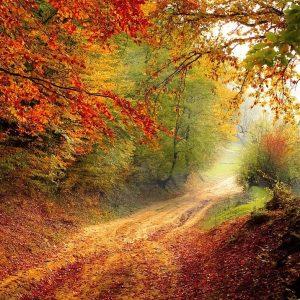 Un bosco immerso nel foliage