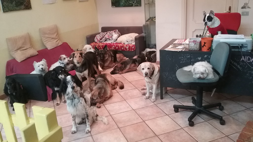 Happy Bau Urban Dog Resort Milano asilo diurno per cani pet sitter
