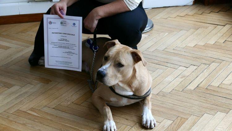 Milano: primi patentini a proprietari di cani, ecco gli obblighi e come  fare per averlo