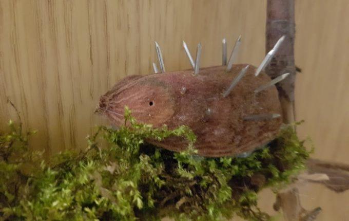 Igel aus Potpourri und Nägeln auf Moos