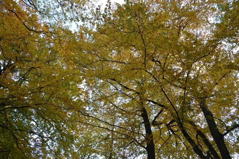 WIB #kw45 buntes Herbstlaub