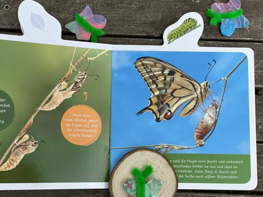 Schmetterling Bilderbuch echte Fotos