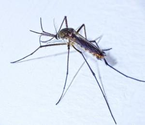 mosquito quarto do bebe