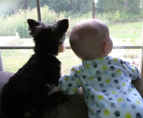 bebê e cachorro na janela