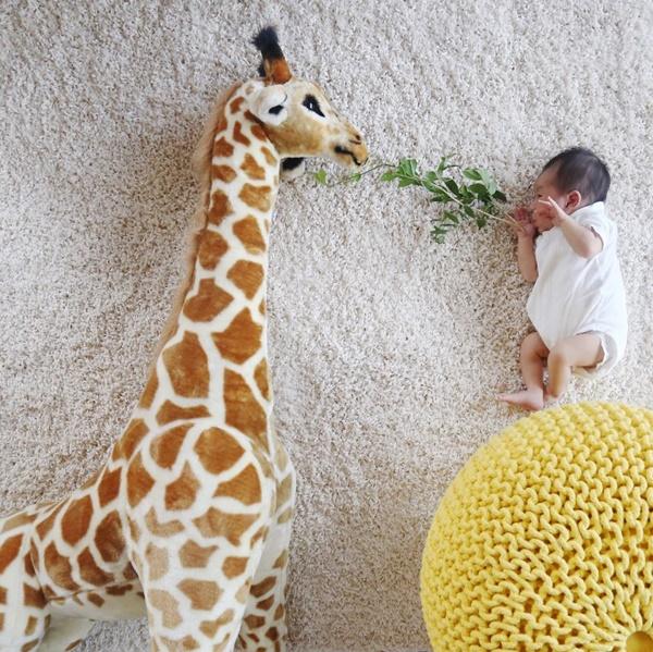 Alimentando a girafa