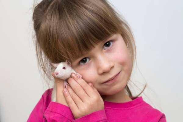 criança brincando com hamster