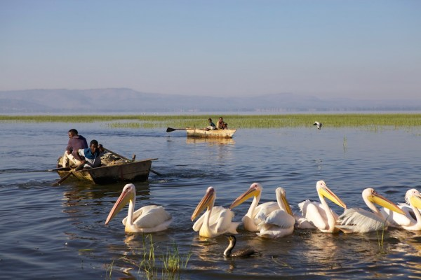 Fishermen rowing their boats, Ethiopia