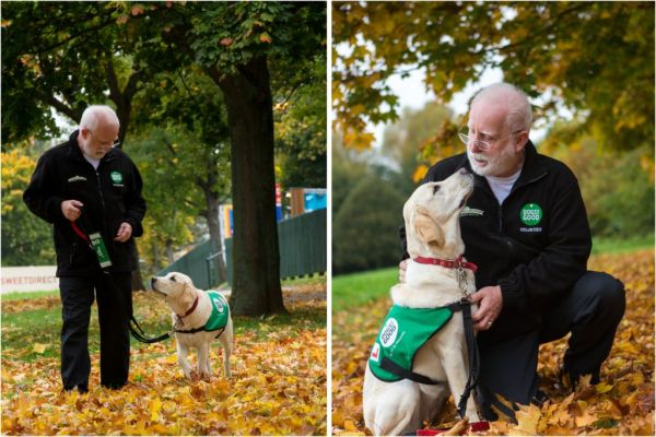 A Dogs for Good volunteer puppy socialiser with a puppy labrador.