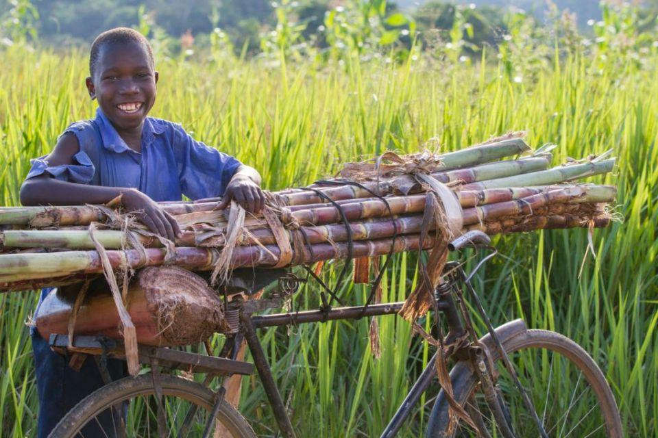 A boy selling sugar cane from a bicycle, Uganda