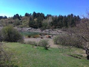lago giacopiane e i cavalli selvaggi d'aveto