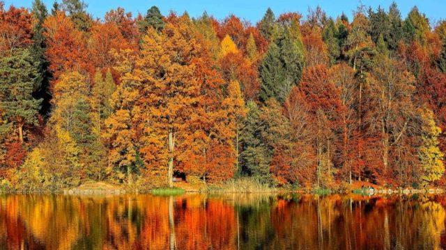 In viaggio tra i colori d'autunno sul treno del Foliage