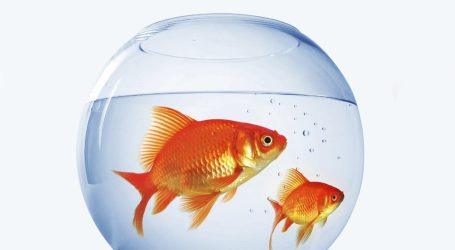 E se o tratamento do cancro de cada doente fosse testado por um peixinho?