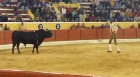 Bullfighter gored to death by bull in Portugal