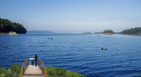 Nova Scotia coast on shortlist for world's first whale and dolphin sanctuary